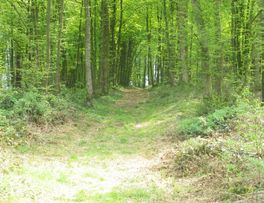 chemin < forêt < Aisne < Picardie -