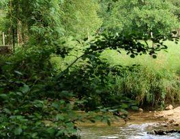 Passe-a-cailloux < Secret < Martigny < Thiérache < Aisne < Hauts-de-France - Photo