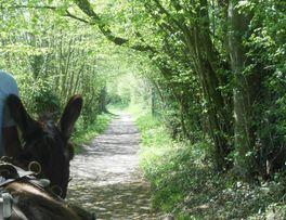 Marche des baudets < La Bouteille < Thiérache < Aisne < Picardie  -