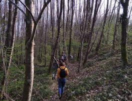 Randonnée en forêt -