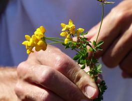Sorties nature < Botanique < Thiérache < Aisne < Hauts de France -