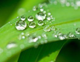 Jardin pluie 02 -