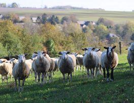 La bergerie < Montloué < Thiérache < Aisne < Hauts-de-France -