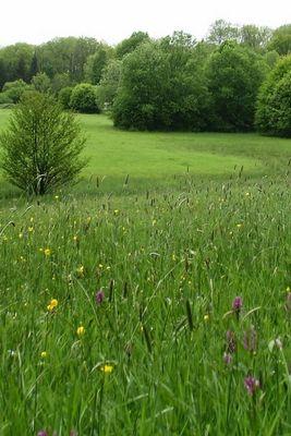 Prairies remarquables du Moulin Fontaine -