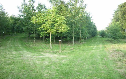 Arboretum_vue_arbres < Vervins < Aisne < Picardie -