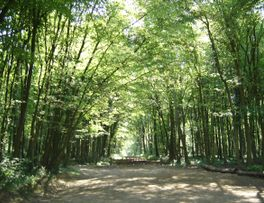 FORÊT D'ANDIGNY -