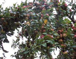 Pommes < Rozoy-sur-serre < Aisne < Picardie -