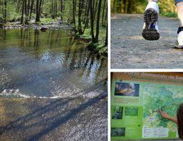 Forêt-de-Saint-Michel < Secret < Thiérache < Aisne < Hauts-de-France  - Photo