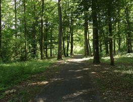 Forêt < Secret < Boué < Thiérache - Photo