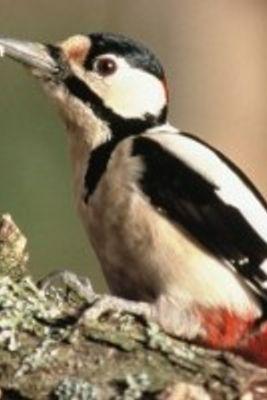 Oiseaux < Aisne < Picardie -