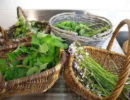 plantes sauvages < Wimy< Thiérache < Aisne < Hauts de France -