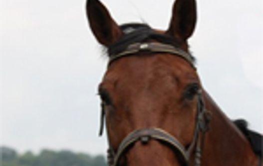 saponay_centre_equestre_cheval -