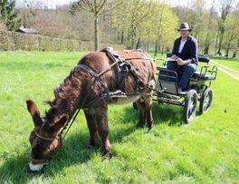 Au pré de l'âne < Fontaine-les-Vervins < Thiérache < Aisne < Hauts-de-France -